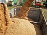 خرید تضمینی بیش از ۱۲۵ هزار تن محصولات کشاورزی در استان قزوین