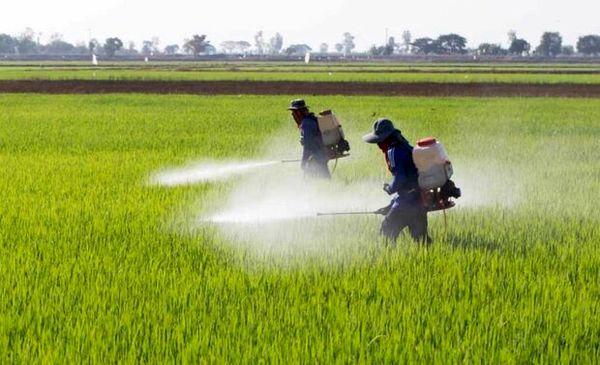 اقدامات مبارزه با سن غلات، بیماریها و علفهای هرز سازمان جهاد کشاورزی خراسان شمالی