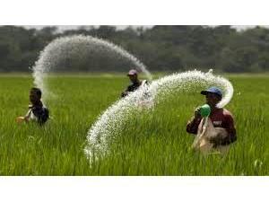 3000 تن کود بین کشاورزان محمودآبادی توزیع شد