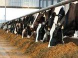 حدود ۲۷۷ میلیارد ریال در بخش مرغداری و دامداری شیروان سرمایهگذاری شد