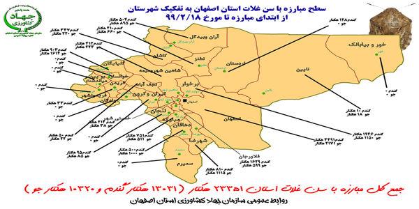 عملیات کنترل سن غلات در استان اصفهان