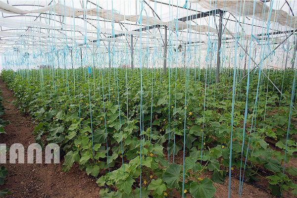 توسعه 1670 هکتاری گلخانه ها در کشور