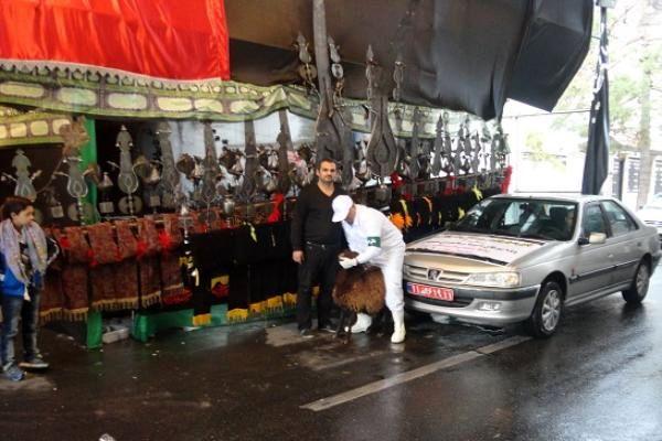 طرح نظارت بهداشتی و شرعی بر دام های قربانی در تاسوعا و عاشورای حسینی اجرا می شود