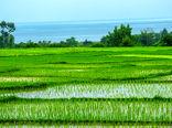 تامین آب حدود 100 هزار هکتار شالیزار با بازسازی آببندان استانهای شمالی