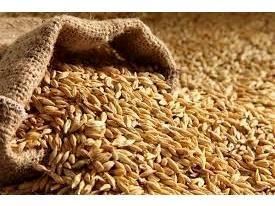 تخصیص 10 هزار تن جو ویژه خشکسالی به مازندران