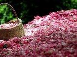 به رنگ صورتی با عطر گلاب