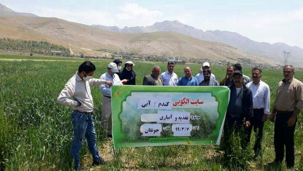 دوره آموزشی با محوریت زراعت گندم در شهرستان فارسان برگزار شد
