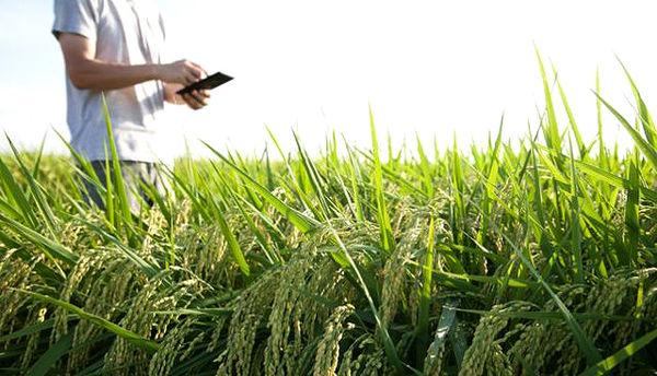 برگزاری جشنواره برای ایدههای کشاورزی نوین