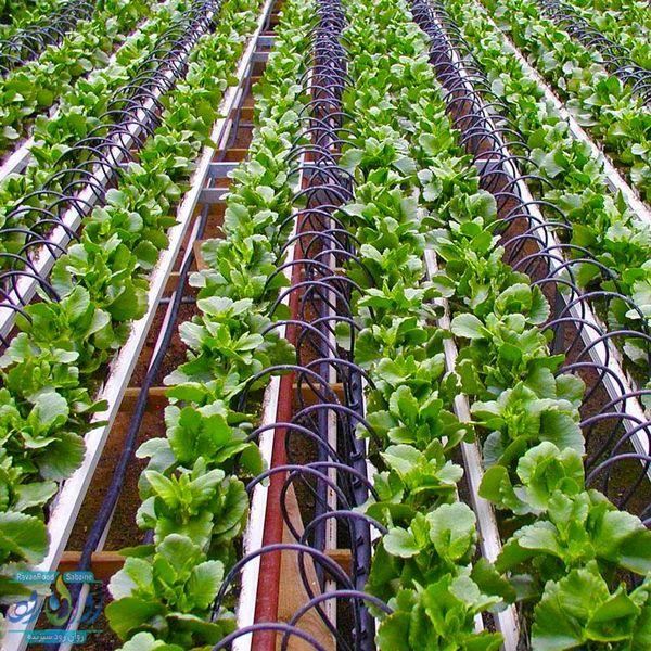 کاهش ۴۰ درصدی مصرف آب در بخش کشاورزی