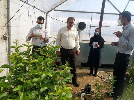 کاشت آزمایشی 3 نهال استوایی در داراب