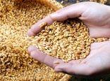 رشد 65 درصدی تولید بذر گواهیشده در کشور