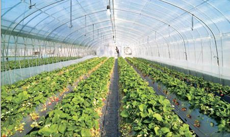 برنامه افزایش سطح زیر کشت گلخانه ها در فاروج