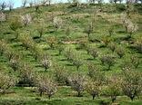 توسعه باغات در اراضی شیبدار زمینهساز افزایش تولید و اشتغالزایی در خوزستان