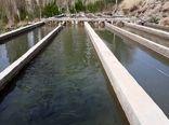 تامین بیش از ۵۰۰ هزار تخم ماهی قزل آلا در جنوب کرمان