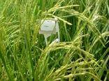 مبارزه بیولوژیک علیه نسل اول آفت کرم ساقه خوار برنج در لنگرود