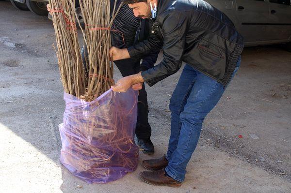 توزیع 1000 اصله نهال رایگان نهال توت در شهرستان فاروج