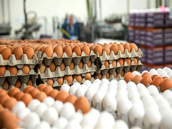 تولید بیش از 1 میلیون تن تخم مرغ در سال جاری