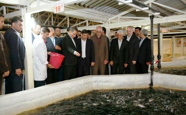 فاز یک و دو طرح توسعه مزرعه ماهی سرای کرج افتتاح شد