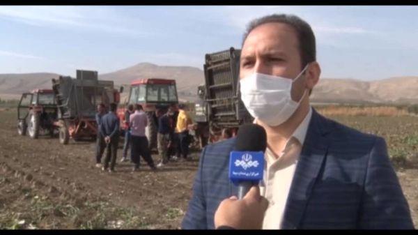 برداشت 2062 تن دانه روغنی کلزا از مزارع شهرستان نقده