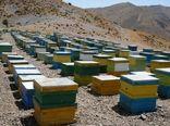 افزایش 3 برابری کلنیهای زنبور عسل استان بوشهر