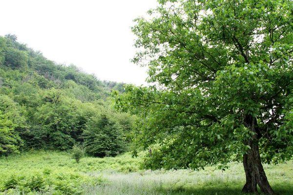 فائو دستورالعملهای جدیدی به کشورهای عضو برای پایش ملی جنگلها ارائه کرد