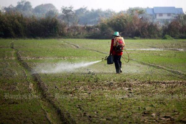 اطمینانبخشی به مردم تایلند درباره ایمنی مواد غذایی/ محدودیت واردات مواد شیمیایی کشاورزی در تایلند/ طرح جامع کاشت محصولات ارگانیک برای 2017-2021 آماده شد