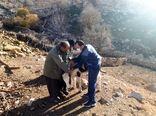 مناطق صعب العبور خوزستان مشمول اقدامات دامپزشکی