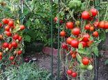 تولید نهایی ۱۵ محصول گواهی شده سالم در استان اصفهان