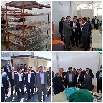 یک واحد بستهبندی آبزیان در شیراز گشایش یافت