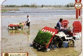 افزایش 2 برابری کشت مکانیزه برنج در گلوگاه