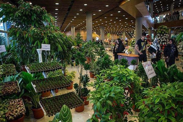 دردهایتان را در نمایشگاه گیاهان دارویی درمان کنید!