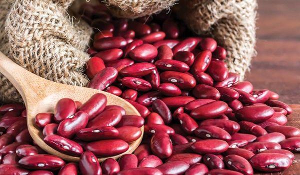 خرید توافقی لوبیا گامی دیگر در راستای حمایت از کشاورزان
