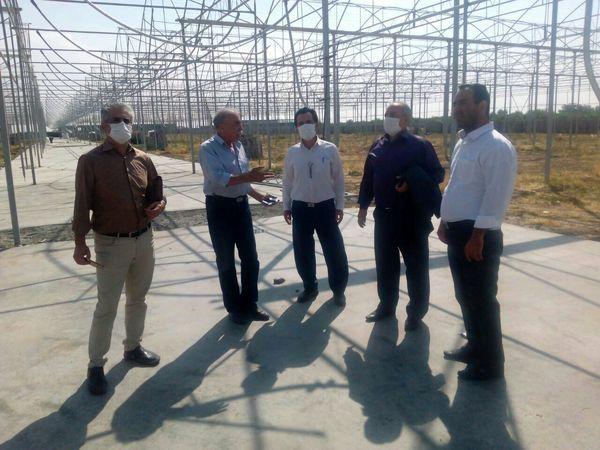 امسال ۱۰ هکتار گلخانه در شهرستان بویین زهرا به بهره برداری می رسد