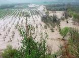 پرداخت ۹۷۰ میلیارد تومان کمک بلاعوض به خسارت دیدگان بخش کشاورزی
