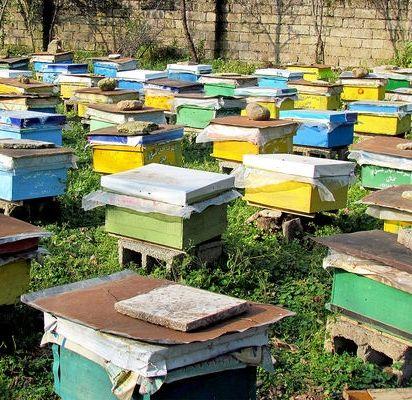 برداشت 30 تن عسل در ارسنجان