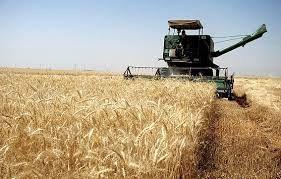 افزایش تولید 100 هزار تنی گندم در استان ایلام