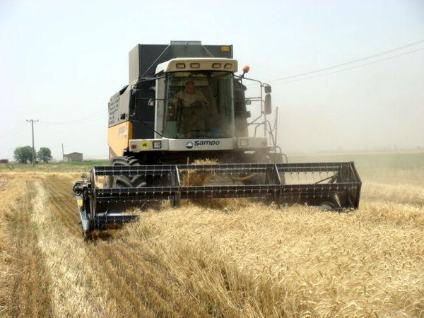 خرید بیش از 25 هزارتن گندم مازاد بر نیاز کشاورزان در شهرستان آوج