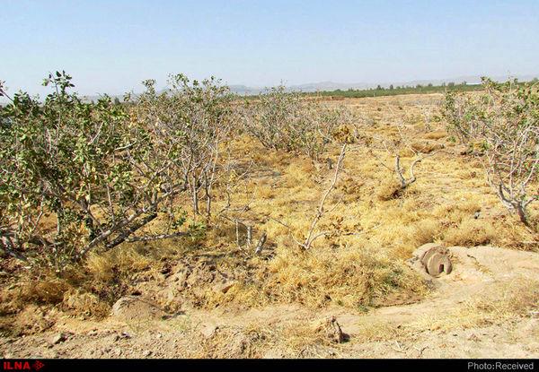 صدور دستور قضایی جهت برخورد با عاملین باغات رها شده در شهرستان انار