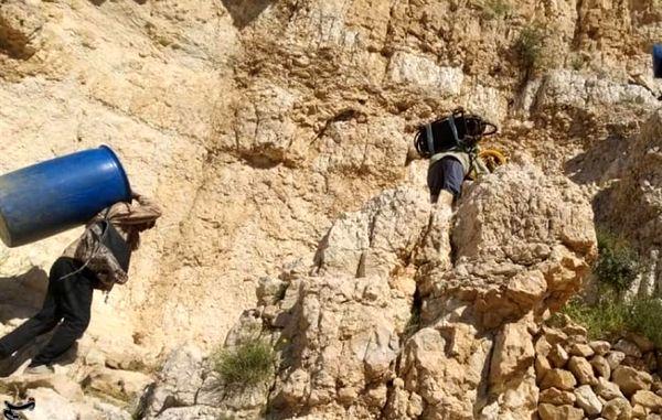 ۲۴۰۰ هکتار اراضی استان بوشهر علیه ملخهای صحرایی سمپاشی شد