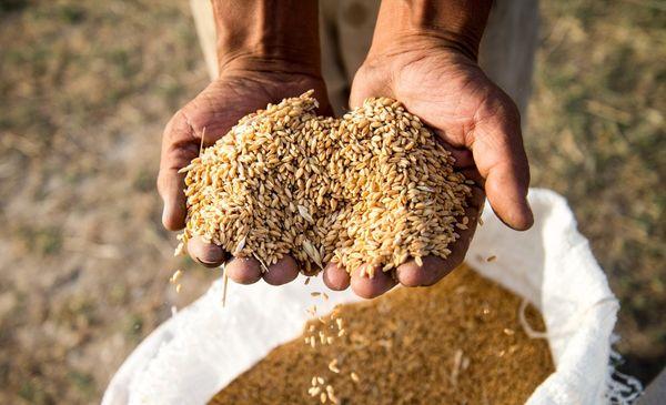 رقابت صادراتی قیمت جهانی گندم را کاهش داد