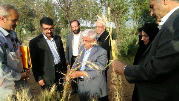 طرح ملی الگوی کشت محصولات کشاورزی اجرا میشود