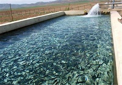 تولید 55 میلیون قطعه انواع بچه ماهی و تخم چشم زده قزال آلا در آذربایجان غربی