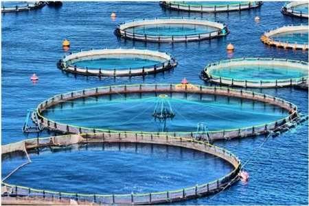 طرح پرورش ماهی در قفس کنگان افتتاح شد