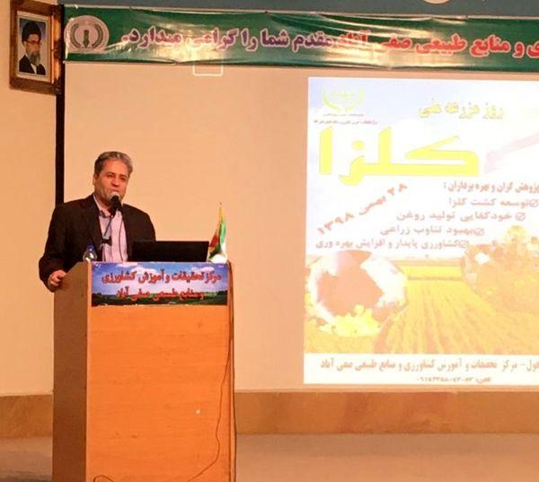 خوزستان مهمترین استان در تولید محصول و بذر کلزای بهاره در کشور