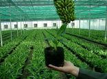 4300 میلیارد ریال در بخش کشاورزی سیستان و بلوچستان سرمایه گذاری شده است