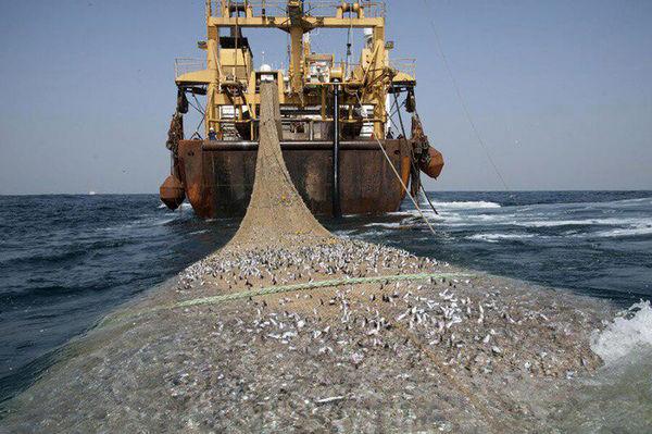 صید میگو، چالش ویرانگر توازن زیستی آبزیان خلیج فارس
