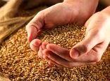 خرید ۱۸ هزار تن گندم بذری از شرکتهای تولیدکننده بذر لرستان