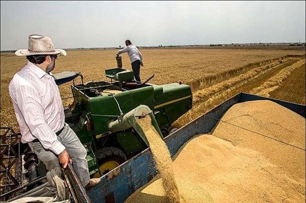 بیش بینی تولید 45 هزارتن گندم در بیضا