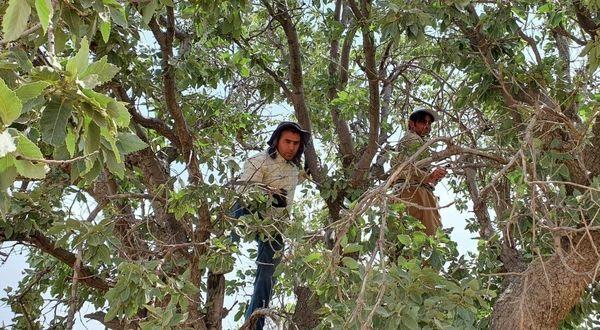 حرکت خودجوش مردم در پاکسازی جنگلهای سیروان از لورانتوس