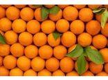 صادرات روزانه ۵۰ کانتینر مرکبات از مازندران